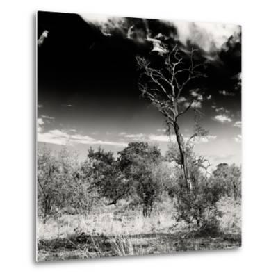 Awesome South Africa Collection Square - Savannah Trees B&W-Philippe Hugonnard-Metal Print