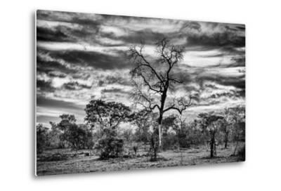 Awesome South Africa Collection B&W - African Landscape with Acacia Tree II-Philippe Hugonnard-Metal Print