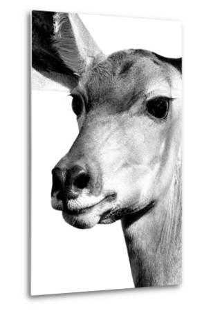 Safari Profile Collection - Portrait of Impala White Edition-Philippe Hugonnard-Metal Print