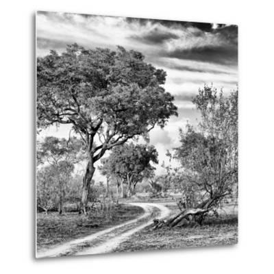 Awesome South Africa Collection Square - African Safari Road B&W-Philippe Hugonnard-Metal Print