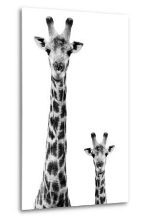 Safari Profile Collection - Giraffe and Baby White Edition II-Philippe Hugonnard-Metal Print
