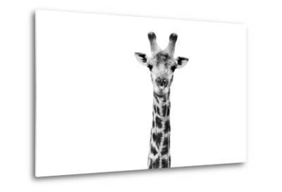 Safari Profile Collection - Giraffe Portrait White Edition II-Philippe Hugonnard-Metal Print