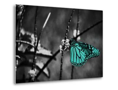 Lone Colored Butterfly II-Gail Peck-Metal Print