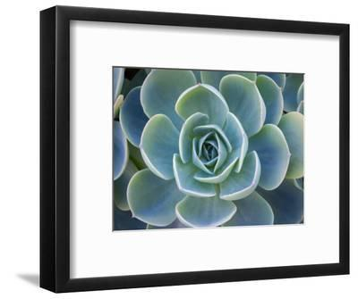 Close-Up of a Succulent Plant-Diane Miller-Framed Photographic Print