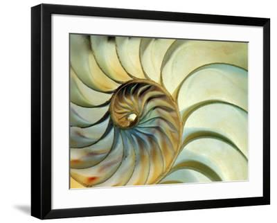 Close-up of Nautilus Shell Spirals-Eric Kamp-Framed Photographic Print