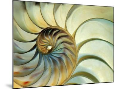 Close-up of Nautilus Shell Spirals-Ellen Kamp-Mounted Photographic Print