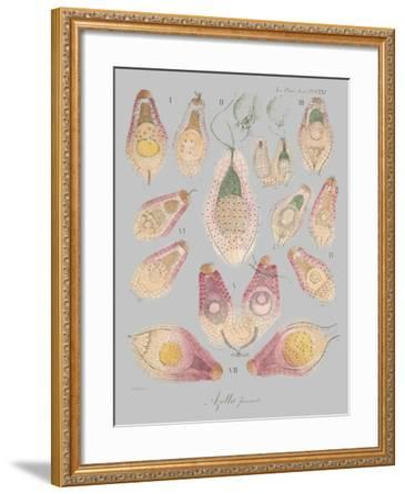 Sea Elements II-Jennifer Goldberger-Framed Art Print