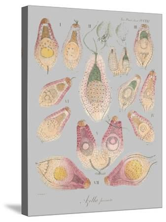 Sea Elements II-Jennifer Goldberger-Stretched Canvas Print