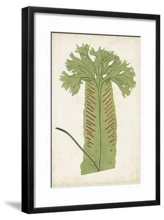 Fern Family V-Lowe-Framed Art Print