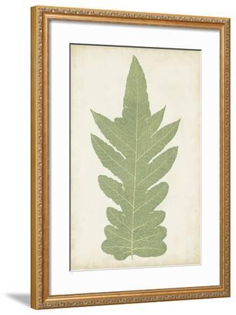 Fern Family IX-Lowe-Framed Art Print