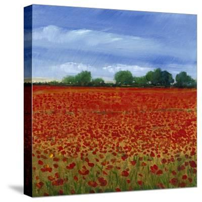 Field of Poppies II-Tim OToole-Stretched Canvas Print