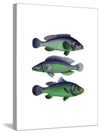 Blue and Green Fish Trio-Fab Funky-Stretched Canvas Print