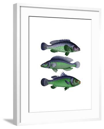 Blue and Green Fish Trio-Fab Funky-Framed Art Print