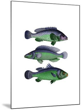Blue and Green Fish Trio-Fab Funky-Mounted Art Print