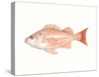 Watercolor Deep Sea Fish I-Naomi McCavitt-Stretched Canvas Print