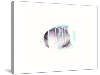 Watercolor Tropical Fish III-Naomi McCavitt-Stretched Canvas Print