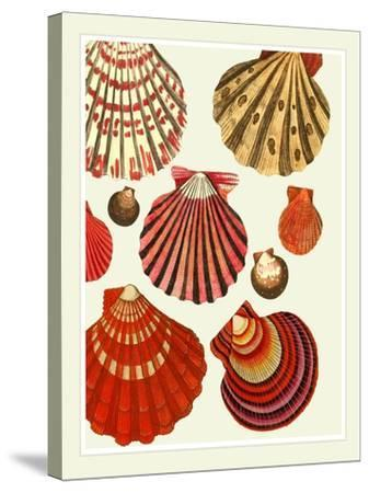 Red and Cream Clam Shells-Fab Funky-Stretched Canvas Print