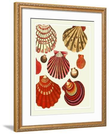 Red and Cream Clam Shells-Fab Funky-Framed Art Print
