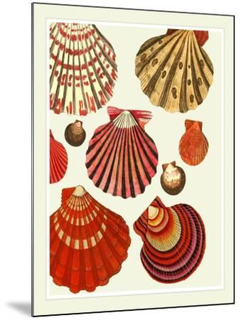 Red and Cream Clam Shells-Fab Funky-Mounted Art Print