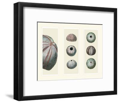Sea Urchins on 3 Panels-Fab Funky-Framed Art Print