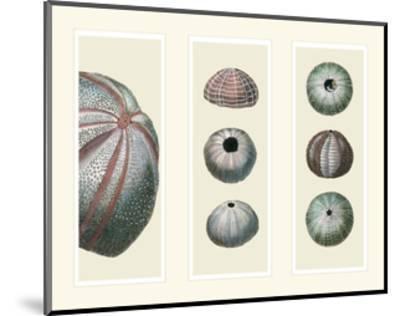Sea Urchins on 3 Panels-Fab Funky-Mounted Art Print