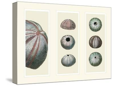 Sea Urchins on 3 Panels-Fab Funky-Stretched Canvas Print