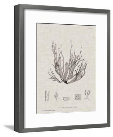 Charcoal & Linen Seaweed I-Henry Bradbury-Framed Art Print