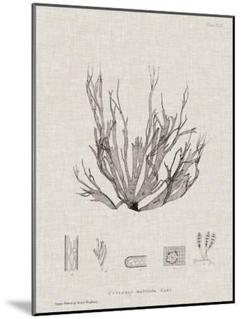 Charcoal & Linen Seaweed I-Henry Bradbury-Mounted Art Print