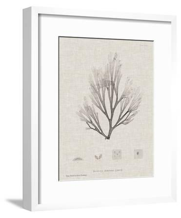 Charcoal & Linen Seaweed III-Henry Bradbury-Framed Art Print