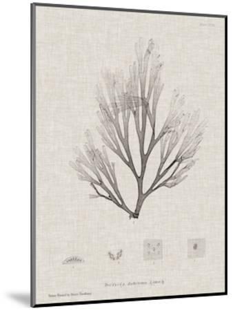 Charcoal & Linen Seaweed III-Henry Bradbury-Mounted Art Print