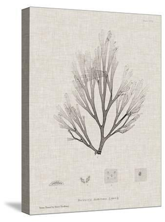 Charcoal & Linen Seaweed III-Henry Bradbury-Stretched Canvas Print