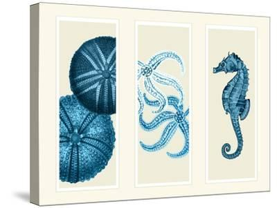 Three Panel Print Sea Urchin Starfish and Seahorse in Blue-Fab Funky-Stretched Canvas Print