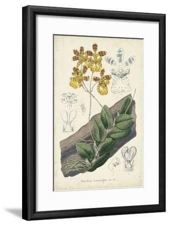Orchid Delight I-George Severeyns-Framed Art Print