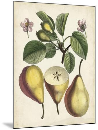 Antique Pear Study II--Mounted Art Print