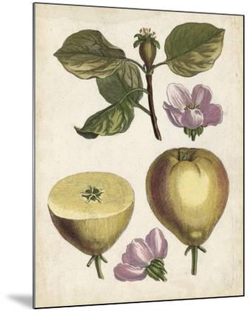Antique Pear Study IV--Mounted Art Print