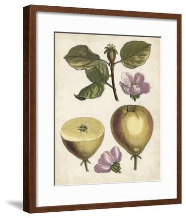 Antique Pear Study IV--Framed Art Print