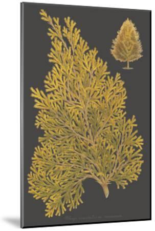 Trees & Leaves III-Vision Studio-Mounted Art Print