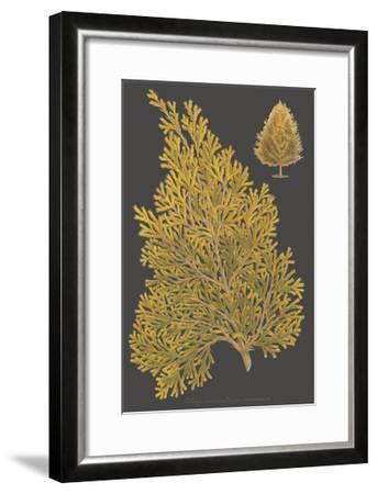 Trees & Leaves III-Vision Studio-Framed Art Print