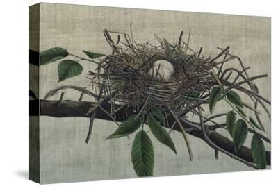 Nesting III-John Butler-Stretched Canvas Print