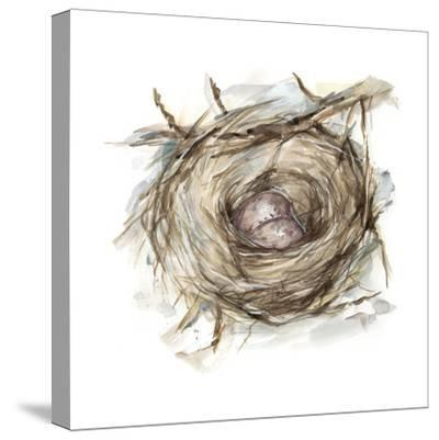 Bird Nest Study IV-Ethan Harper-Stretched Canvas Print