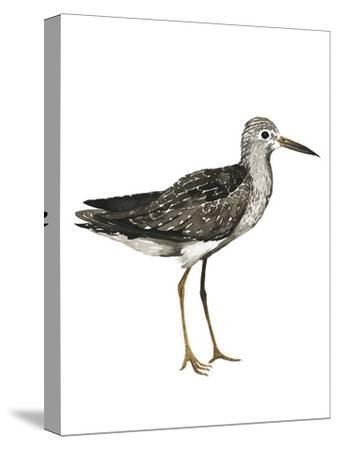 Sea Bird III-Grace Popp-Stretched Canvas Print
