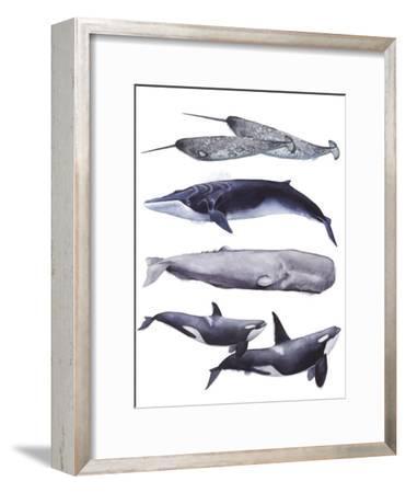 Whale Stack II-Grace Popp-Framed Art Print