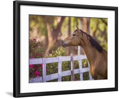 Flower Frolick I-Ozana Sturgeon-Framed Photographic Print