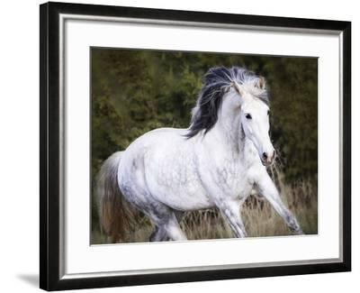 Horse in the Field V-Ozana Sturgeon-Framed Photographic Print