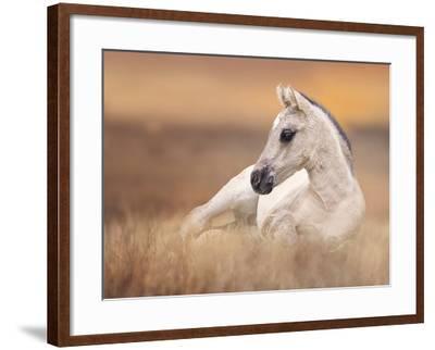 Foal in the Field II-Ozana Sturgeon-Framed Photographic Print