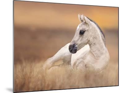 Foal in the Field II-Ozana Sturgeon-Mounted Photographic Print