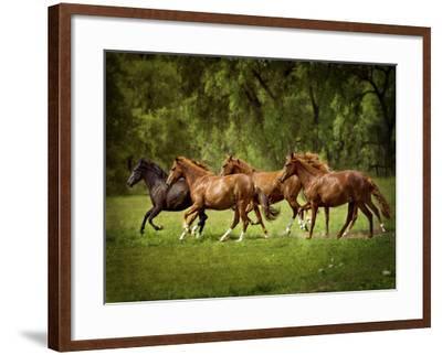 Horses in the Field III-Ozana Sturgeon-Framed Photographic Print