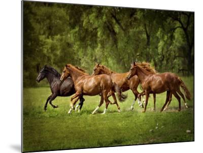 Horses in the Field III-Ozana Sturgeon-Mounted Photographic Print