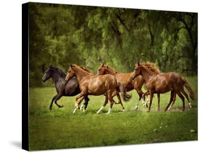 Horses in the Field III-Ozana Sturgeon-Stretched Canvas Print