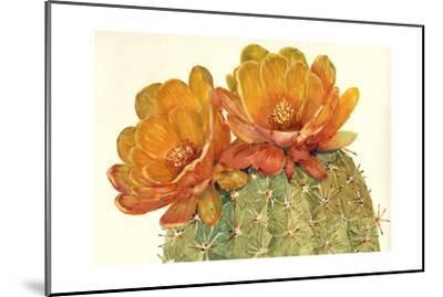 Cactus Blossoms II-Tim OToole-Mounted Art Print
